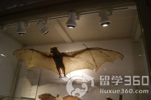 比较动物学博物馆在杰出的瑞士动物学家louisagas