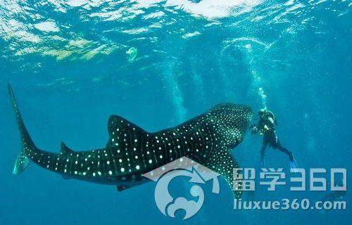 壁纸 动物 海洋动物 鲸鱼 桌面 500_320