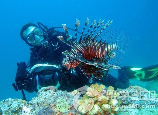 Payar Islands    位于兰卡威南方19海浬的巴也岛,是兰卡威南端群岛中最大的一个岛,也是马来西亚首创的天然海洋公园。   从瓜镇搭乘豪华渡轮,只要三小时即可抵达。由于巴也岛是个受保护的海岛,故无住宿设施,但允许在岛上露营,惟须事先取得吉打州渔业局或兰卡威渔业局的许可,使得此地海水清澈见底,纯净天空。而距巴也岛不远处的(Langkawi Coral),建有一个海底生物观赏室,游客们可以直接透过玻璃窗观赏到各类海底生物。此外还可以在此游泳与浮潜,直接与鱼儿一同遨游海洋。   天鹅岛 Pulau