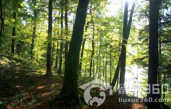 林业食品安全展板
