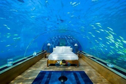 壁纸 海底 海底世界 海洋馆 水族馆 桌面 500_333