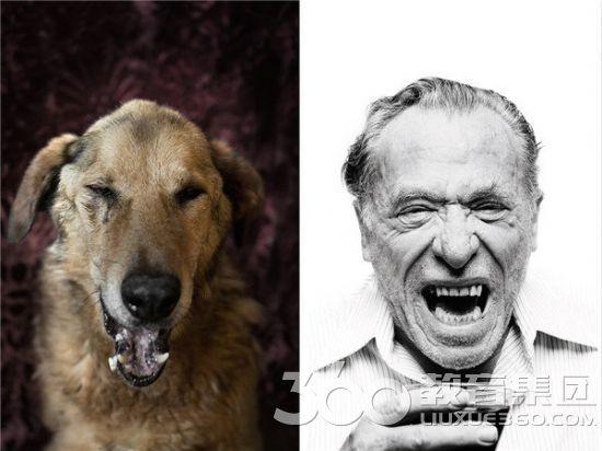 意大利摄影师将17只狗打扮成西方作家