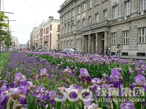 """保加利亚:""""玫瑰之国""""――保加利亚"""