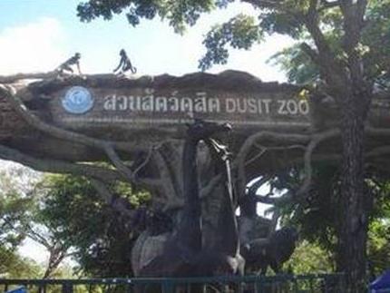 泰国最大的动物园——考遴动物园(duzitzoo)