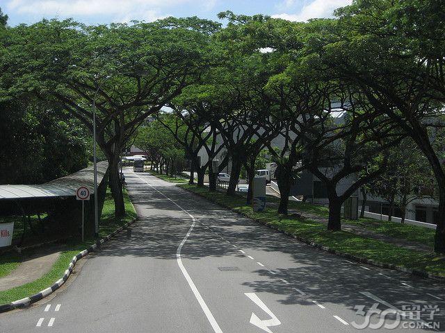 新加坡南洋理工大学师资力量