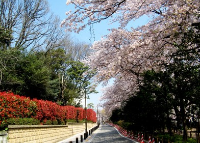高考日本留学