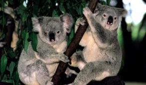 澳洲十年签证的四大猜测