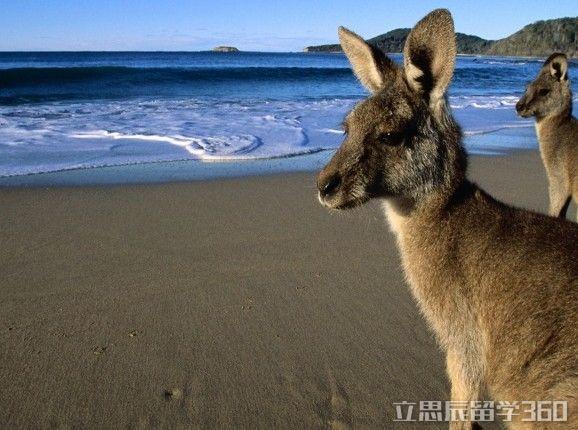 澳洲留学真的很水吗?澳洲大学已经变成文凭工厂?这个回答值得思考~