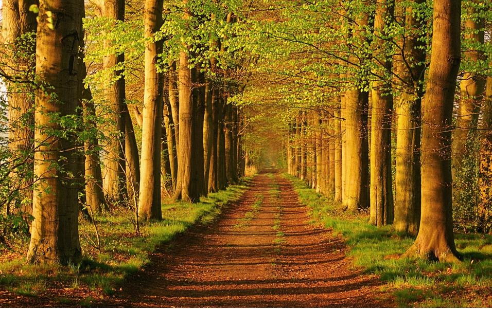 选择去荷兰留学硕士的情况是怎么样的呢?