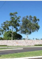 澳大利亚南昆士兰大学校园风光(二)