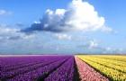 荷兰留学名校申请条件