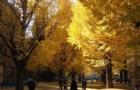 日本留学签证资金费用